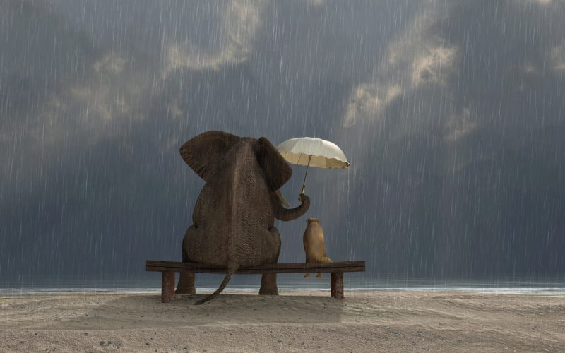 elephant and dog sit under the rain with the elephant holding an umbrella for the dog